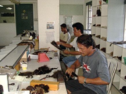 まずブレンダーが注文された毛の準備をします。生の毛では植えられないので剣山のような道具でハックリングという作業を行っています。この部署で注文された毛量、毛色を計算して準備していきます。